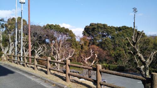 DSC_0023shinmaiko.jpg